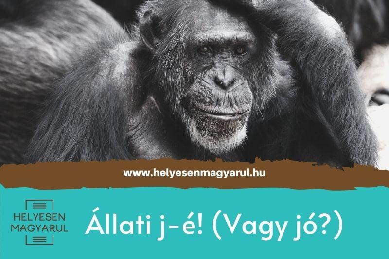 Állati j-é! (vagy jó?)- helyesírási teszt - borítókép